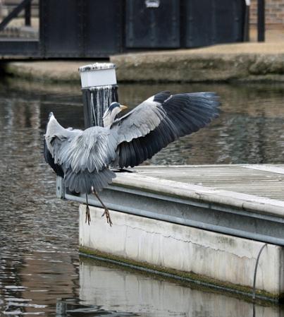 Heron-Brentford